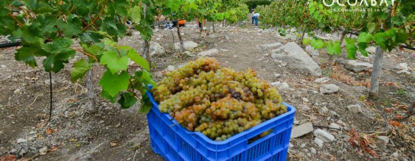 Working on a Vineyard