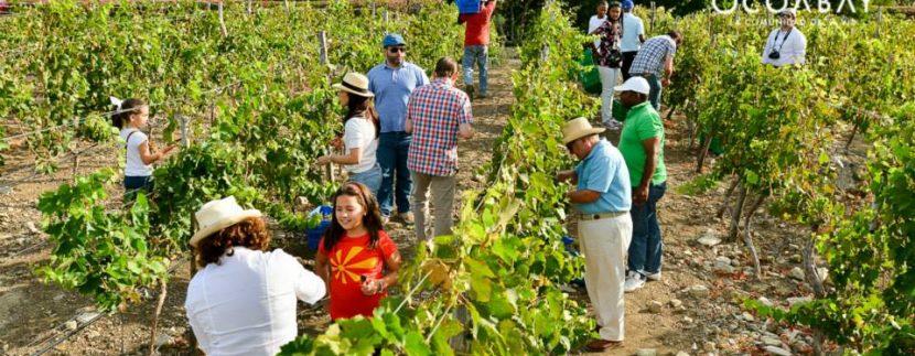 Harvest at Ocoabay with Family