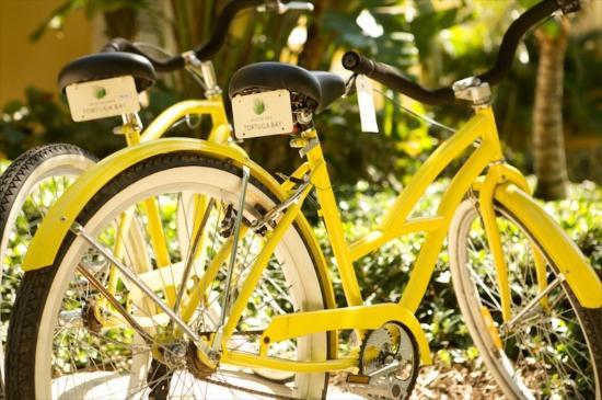 bicycles-at-tortuga-bay