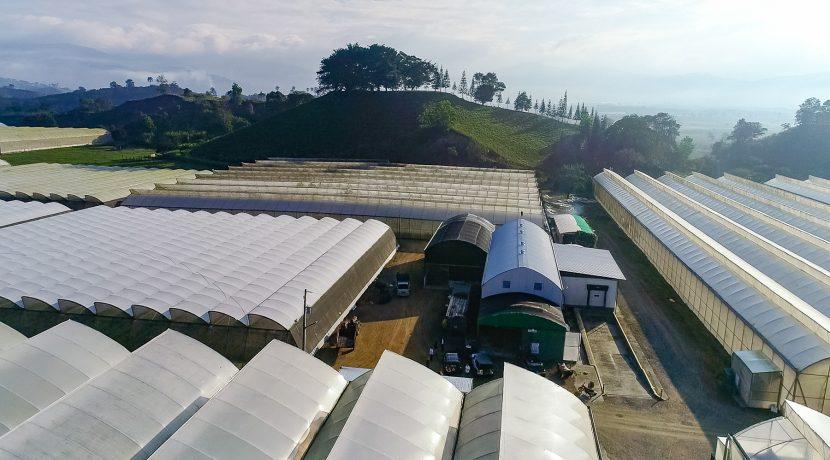 Fincas DR - Rancho Arriba - Greenhouses00001