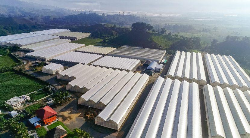 Fincas DR - Rancho Arriba - Greenhouses00002