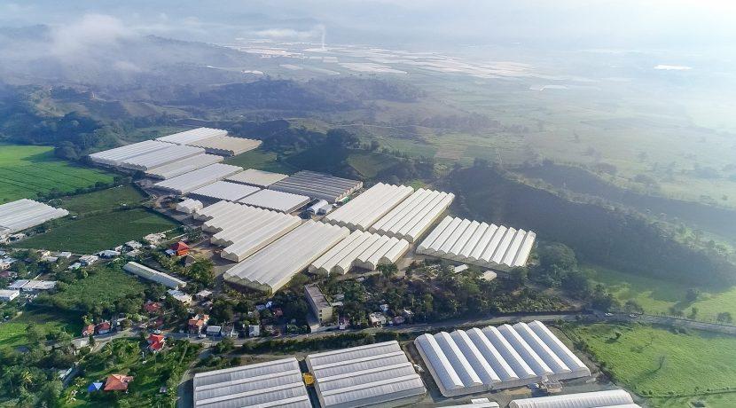 Fincas DR - Rancho Arriba - Greenhouses00003