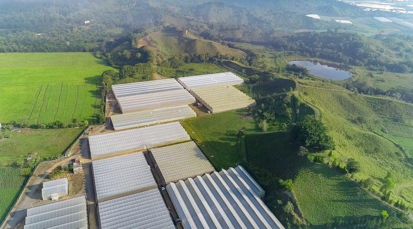 Fincas DR - Rancho Arriba - Greenhouses00005