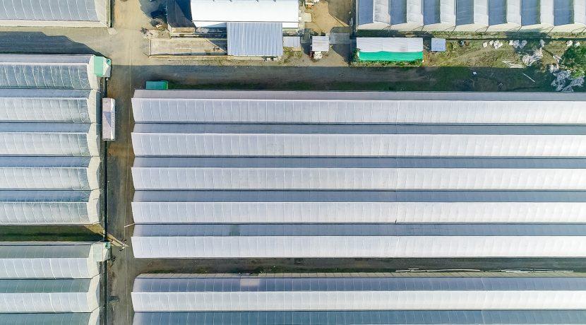 Fincas DR - Rancho Arriba - Greenhouses00006