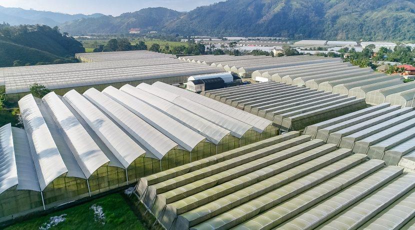 Fincas DR - Rancho Arriba - Greenhouses00007