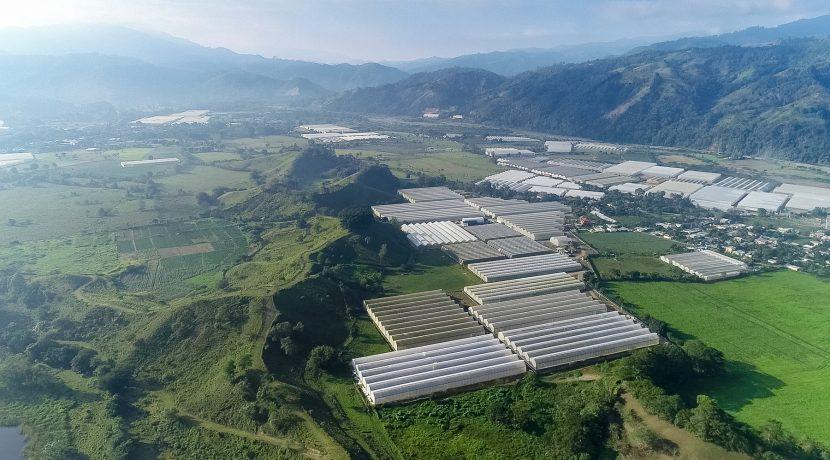 Fincas DR - Rancho Arriba - Greenhouses00010