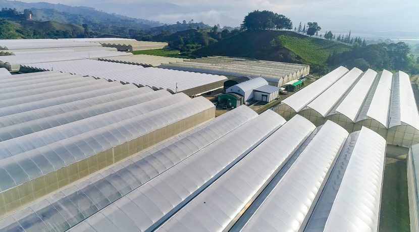 Fincas DR - Rancho Arriba - Greenhouses00014