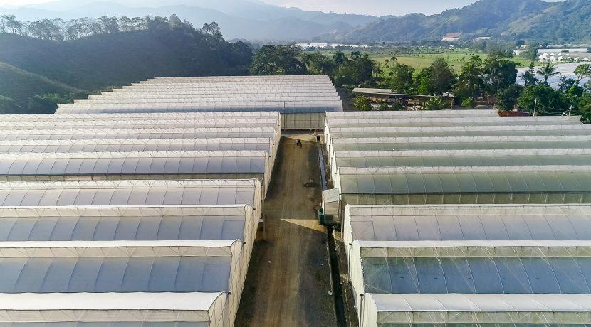 Fincas DR - Rancho Arriba - Greenhouses00015