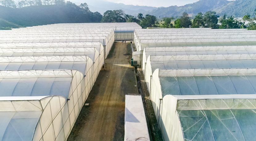 Fincas DR - Rancho Arriba - Greenhouses00016