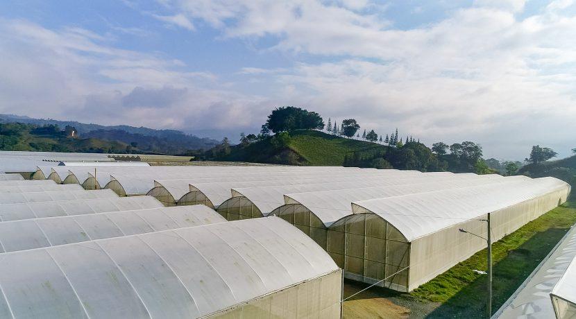 Fincas DR - Rancho Arriba - Greenhouses00017
