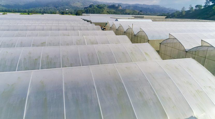 Fincas DR - Rancho Arriba - Greenhouses00018