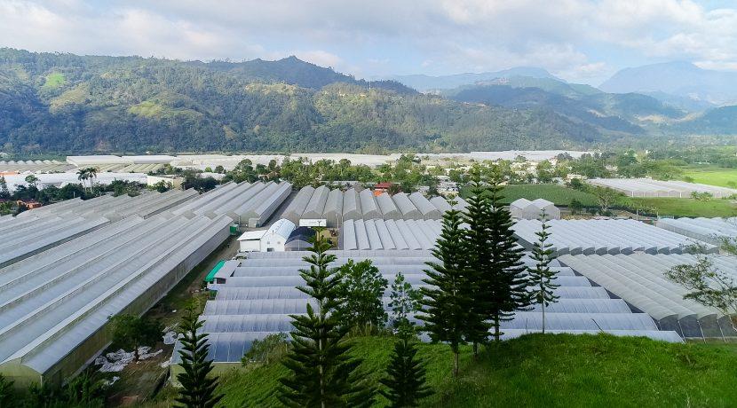 Fincas DR - Rancho Arriba - Greenhouses00020