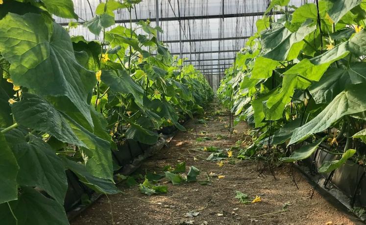 Greenhouse - Rancho Arriba00010