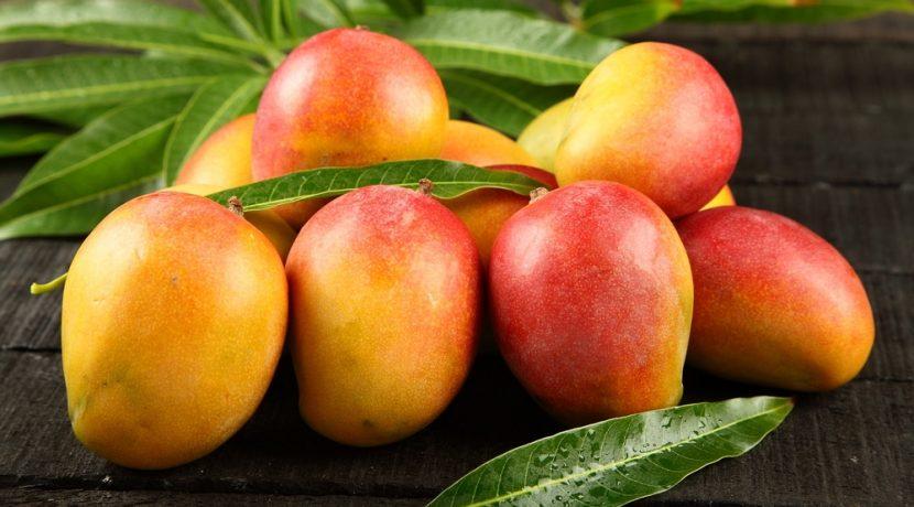 where-do-mangos-grow